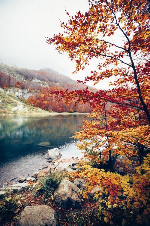 elenamorelli: { longing for autumn }