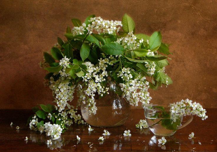 Как хороши весенние цветы!. Обсуждение на LiveInternet - Российский Сервис Онлайн-Дневников