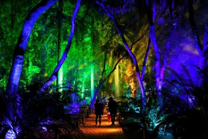 Spectacular Lights Magnificent Glowing Trees Flowers And Other Enchanting Garden Scenery Will Come To Li Enchanted Forest Southern California Magical Garden
