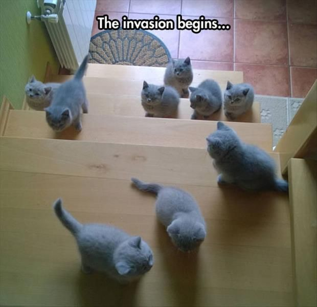 """Attack Of The Pink Kittens!!!!! * * """" KITTEN ON TOP LANDING: """" SOMETHIN'S WRONG HERE. DO YOU SEE US AZ 'PINK'?"""" OTHER KITTEN: """" MAYBE IT'Z LIKE SEEIN' PINK ELEPHANTS."""""""