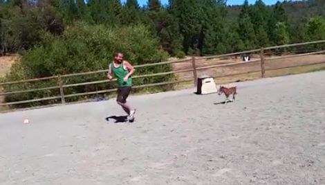 What may be the worlds tiniest horse has a foot race. Now watch him runSo CUTE!