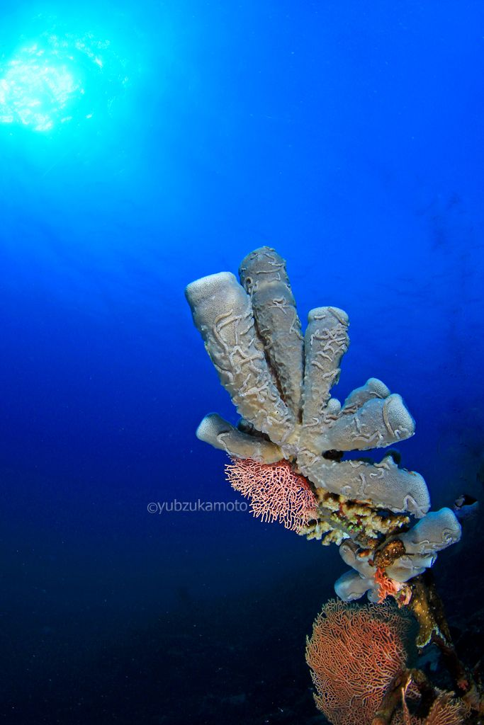 K sponge south bolaang mongondow regency north sulawesi - indonesia