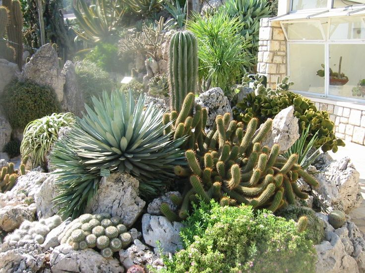Passions et Partage .::. Le jardin exotique de Monaco