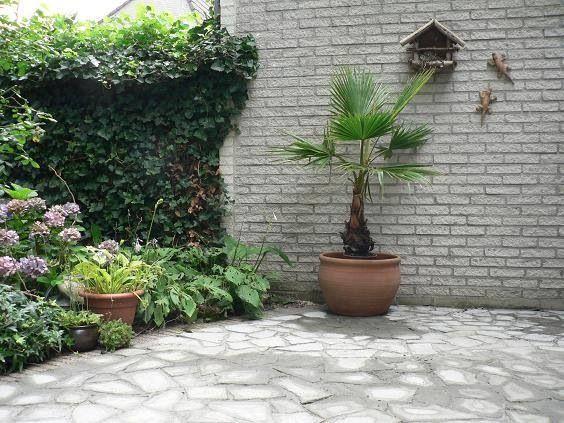 Oude stoeptegels kapot gemaakt, in mozaïek patroon teruggelegd en dicht gesmeerd met cement. Leuk en goedkoop hergebruik van de tegels