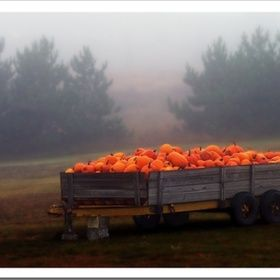 Pumpkin wagon...chill in the air, the scent of Autumn...