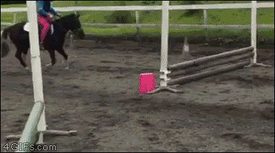 Smart pony knows to stop for safety. It even tips the kid off its head.
