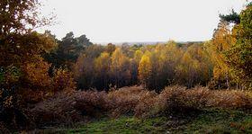 Finchampstead - The Ridges Finchampstead © Jeanette Cox
