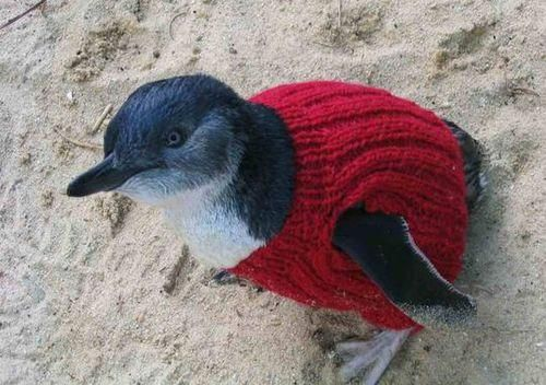 109-Year-Old Spends His Days Knitting Sweaters for Penguins