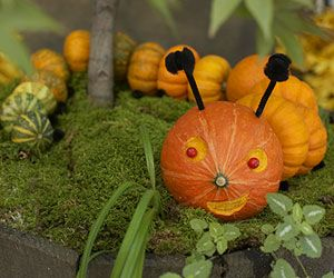 Make Kooky Pumpkin Creatures: Hungry Caterpillar (via Parents.com)  This one makes a cute table centerpiece on top of brocolli for a cute vegetable tray.