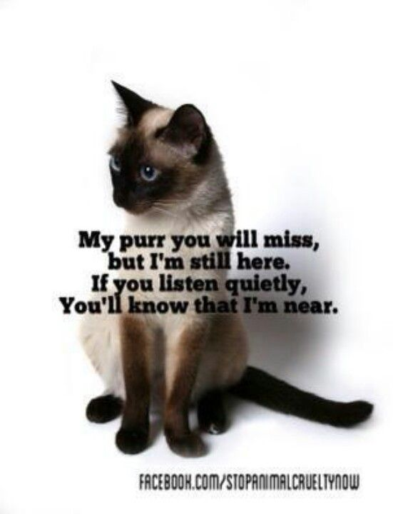 My purr you will miss but I'm still here.  If you listen quietly you'll know that I'm near.