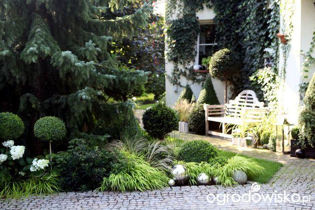 Ogród nie tylko bukszpanowy - część III - strona 30 - Forum ogrodnicze - Ogrodowisko