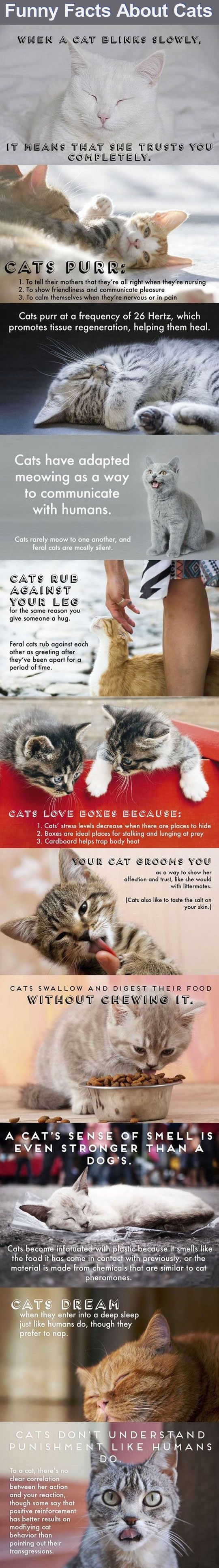 Best Cats Tumblr Ideas On Pinterest Funny Kittens Cat - 18 times tumblr told absolute hilarious truth animals