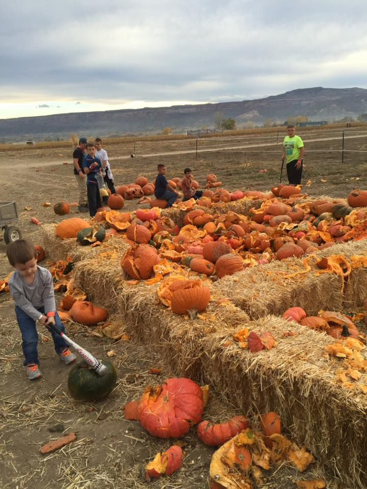 We Found The Best Pumpkin Farms To Visit This Fall Pumpkin Farm Pumpkin Patch Farm Pumpkin Patch