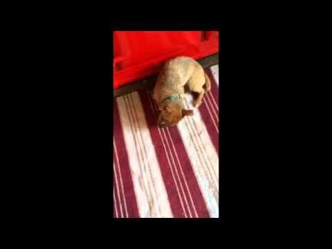 Nugget con Beco Ball Juguete Ecológico para Perro - Mascositas