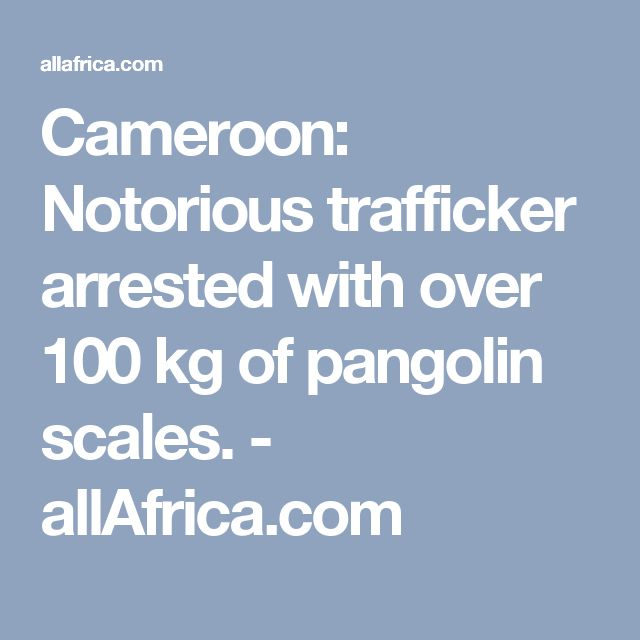 Cameroon: Notorious trafficker arrested with over 100 kg of pangolin scales. - allAfrica.com