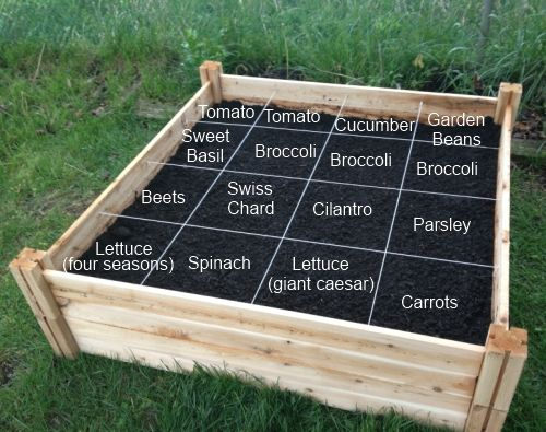 """Square Foot Gardening"". I'm reading How to Grow More Vegetables, the latest edition of the GROW BIOINTENSIVE gardening movement.  I have to read Square Foot Gardening, too.  How else will I figure out what's the best for my space? *Nichole"