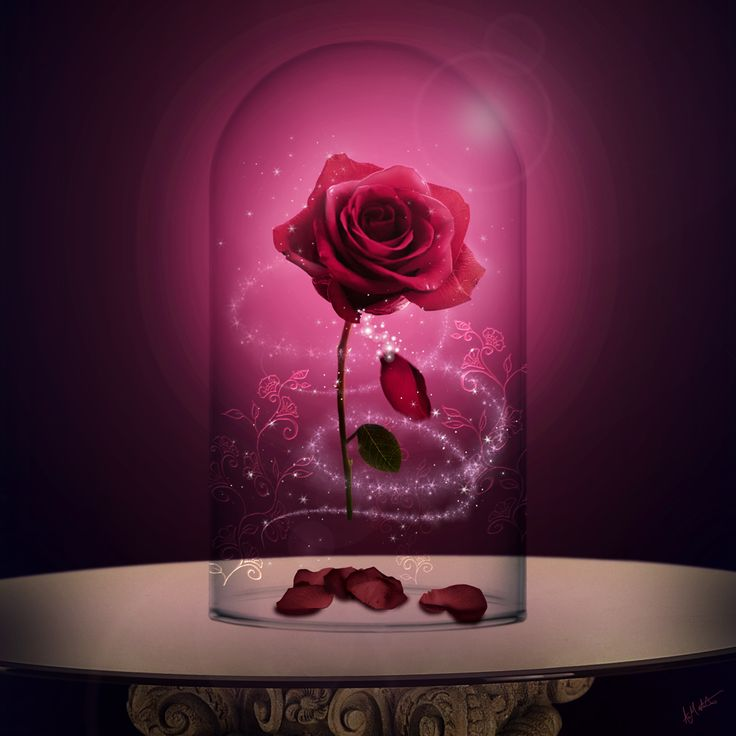 Enchanted Rose, composited in Photoshop by  layout artist Aled Matthews (MAY 2017) Fairy Tales Art from Cloth Cat Animation: Beauty and the Beast, tale as old as time, magic, story, curse, pink, romance