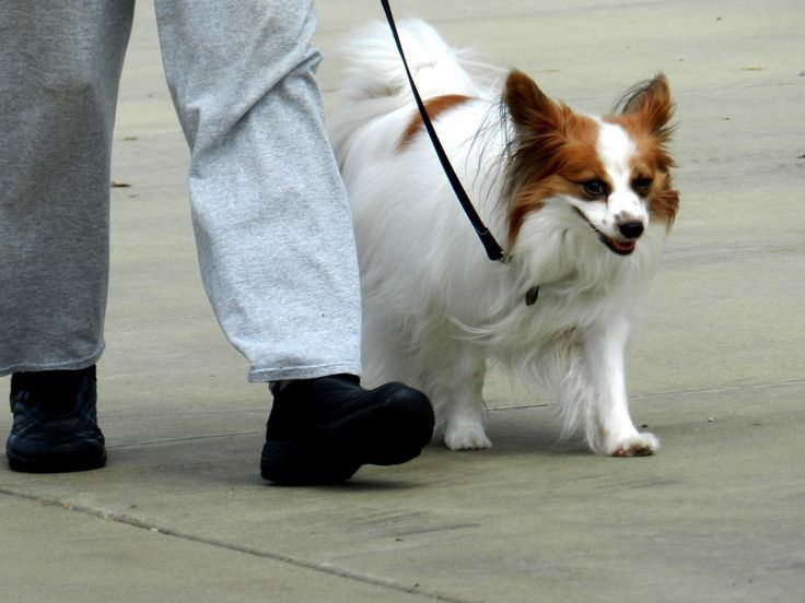 Dog Training Classes: Which is best for your dog?