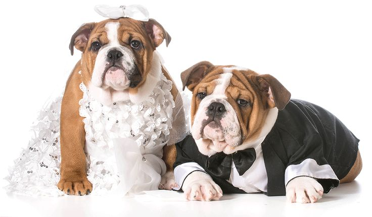 Ideas for involving man's best friend in your Big Day! For more inspiration check out www.smartgroom.com #puppylove #dogsatwedding #weddingplanning