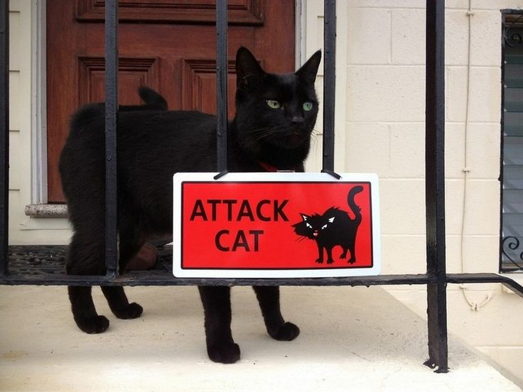 Чем, картинки осторожно смешной котенок