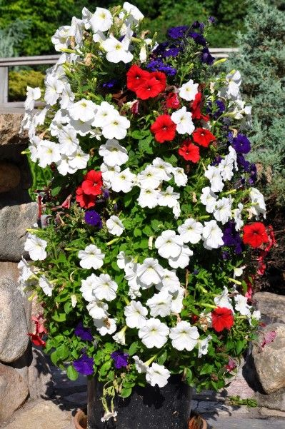 Hometalk :: DIY Flower Tower  - I am determined to have a few of these in my yard this fall with Mums and lettuce...