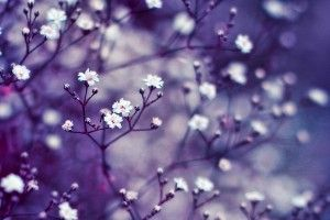 Burst of Life Flowers Buds Spring HD Wallpaper
