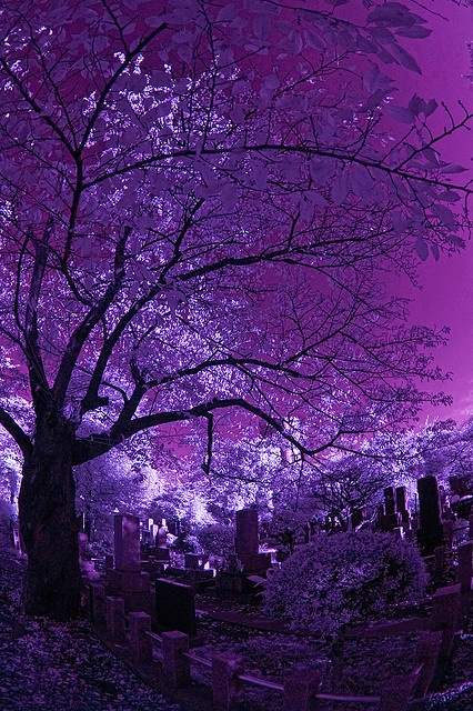 Purple And Pink Aesthetic Wallpaper