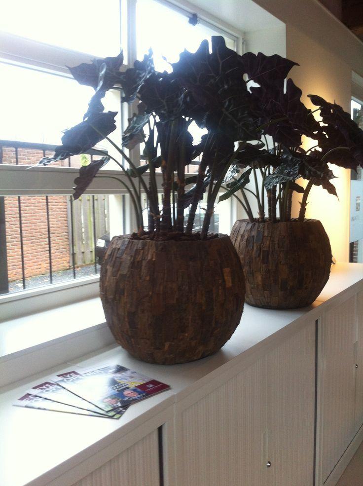 Prachtige plantenbakken met natuurgetrouwe kunstplanten!