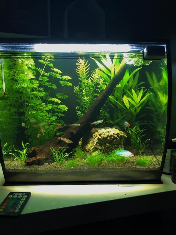Fluval Flex Aquascape Fresh Water Fish Tank Aquascape Fish Tank