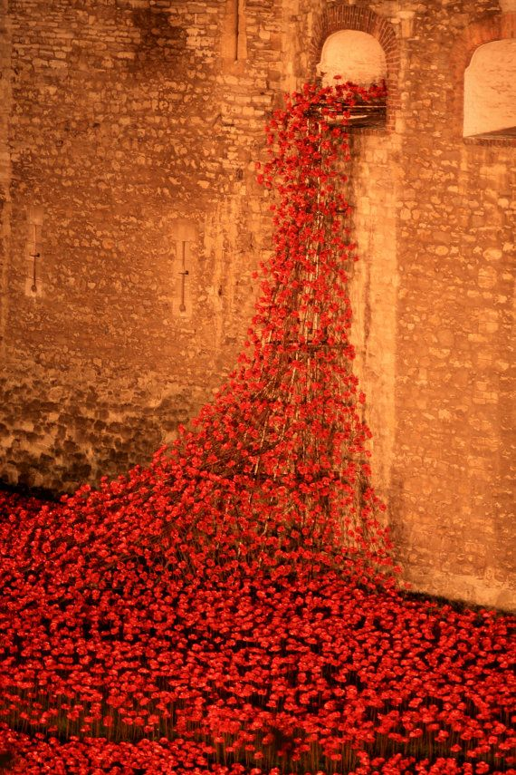 Tower of London Remembrance Day Poppies by DWhitePhotography