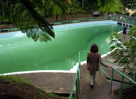 Visita el bosque toro negro una piscina de agua natural for Piscina natural de puerto santiago