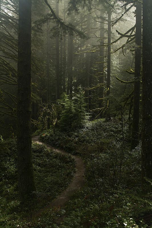 """It was in the forest that I found """"the peace that passeth all understanding."""" ~ Jane Goodall"""