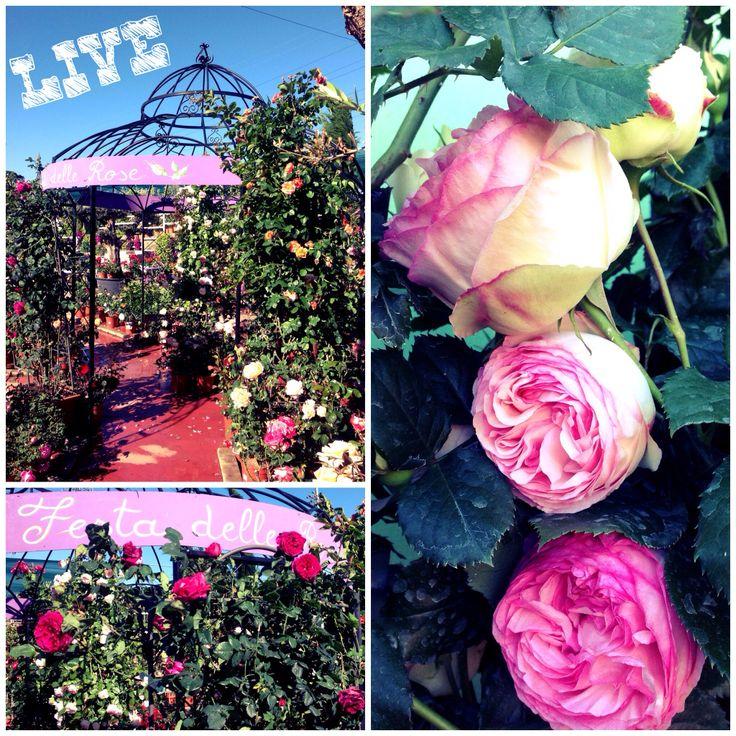 Festa delle Rose.