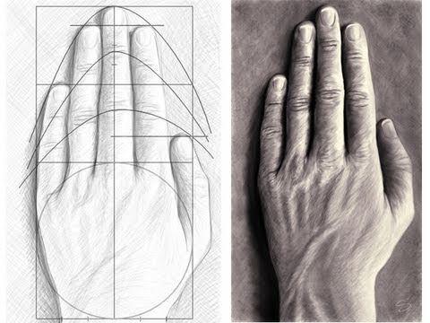 Comment dessiner une main : les proportions puis la texture : GENIAL