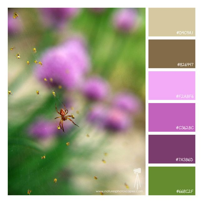 Purple Color Schemes 25 best multi-colored schemes images on pinterest | color palettes