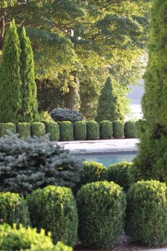 82 best Conifer Combinations images on Pinterest Landscaping