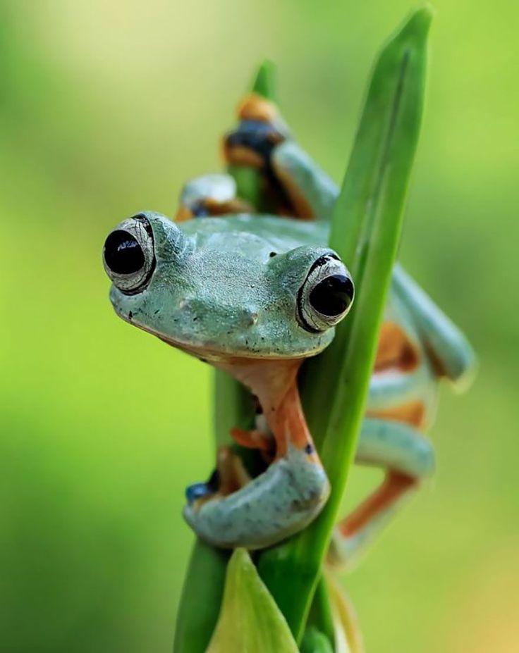 Tanto Yensen é um fotógrafo da Indonésia que chama atenção por suas imagens de sapos – sim, sapos. Seus registros mostram detalhes imperceptíveis desses anfíbios em diversas situações, geralm…