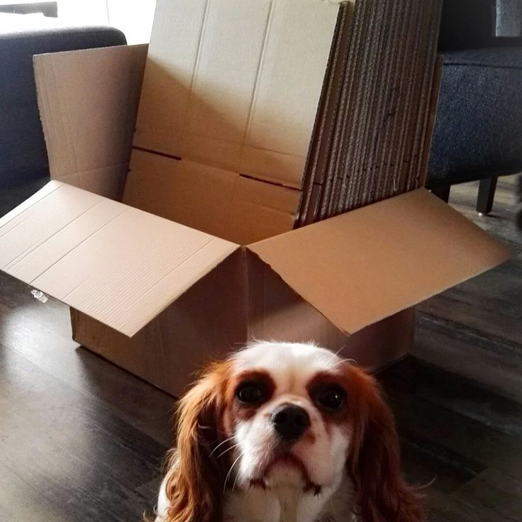 Our boxes for international orders have arrived! Extra sturdy and discreet! The doggie likes them :-)