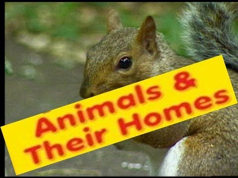 ▶ Habitats of Animals-What is a Habitat? -Video Lesson & Quiz for kids - YouTube