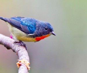 Aranyos madár szép HD háttérképek