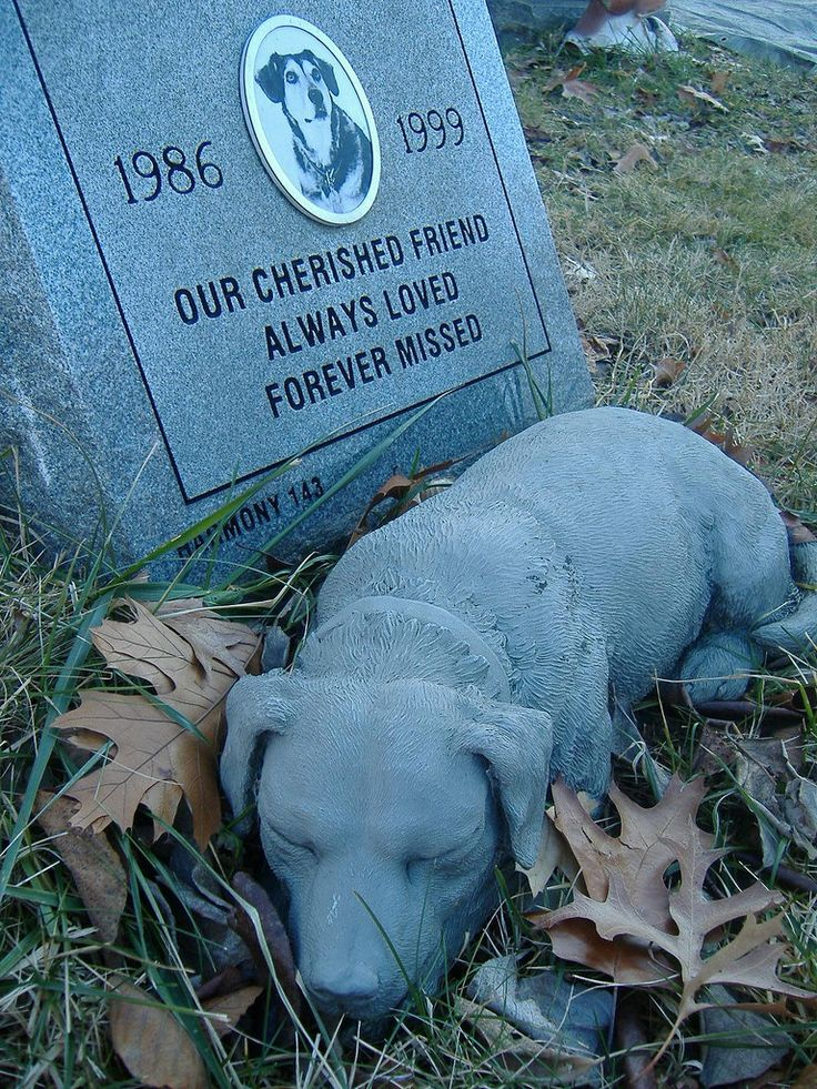 Pet Cemetery Sleeping Dogs