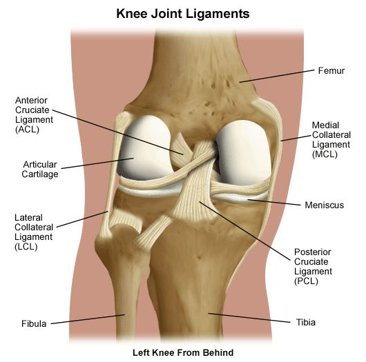 47 best Orthopedic Injury of the Knee images on Pinterest | Knee ...