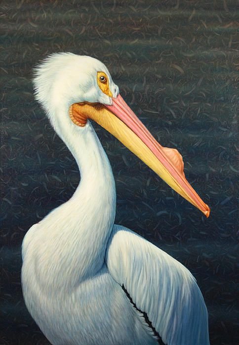 A Great White American Pelican Painting by James W Johnson - A Great White American Pelican Fine Art Prints and Posters for Sale
