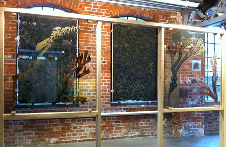 Architect Manthey Kula Explores Seaweed as Natural Insulation For Sustainable Building   Inhabitat - Sustainable Design Innovation, Eco Architecture, Green Building