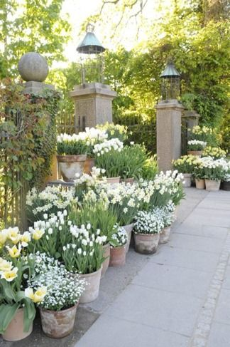 Line an entry with containers of bulbs in the spring. They can be stored or planted elsewhere after and replanted with annuals.