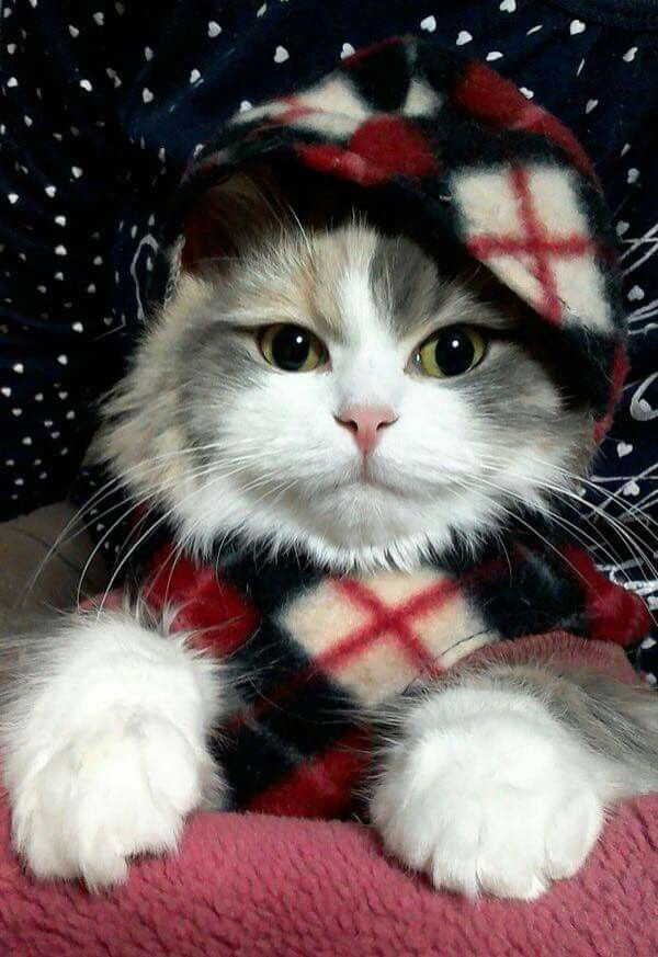 21 best My Style images on Pinterest Animal pictures, Animales - express k amp uuml chen erfahrungen