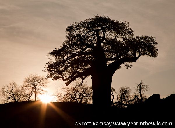 Mapungubwe National Park - One of the most interesting and beautiful of South Africa's national parks