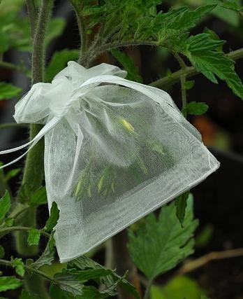 Isolating the blossoms so that the seeds stay true when you save them. use cheese cloth or tulle bags to do this.