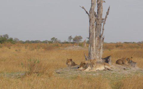Jenny's Botswana Educational - Botwana