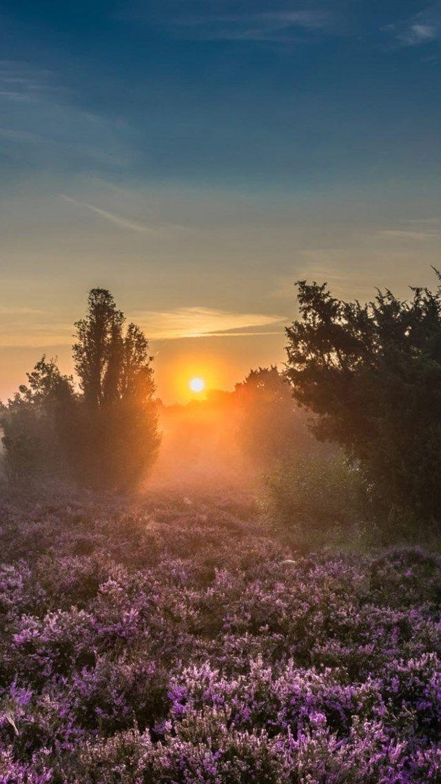 Morning Sunrise Forest Wildflowers Fog Trees Beautiful Morning Landscape Sunrise Pictures Beautiful Landscape Photography Forest Landscape